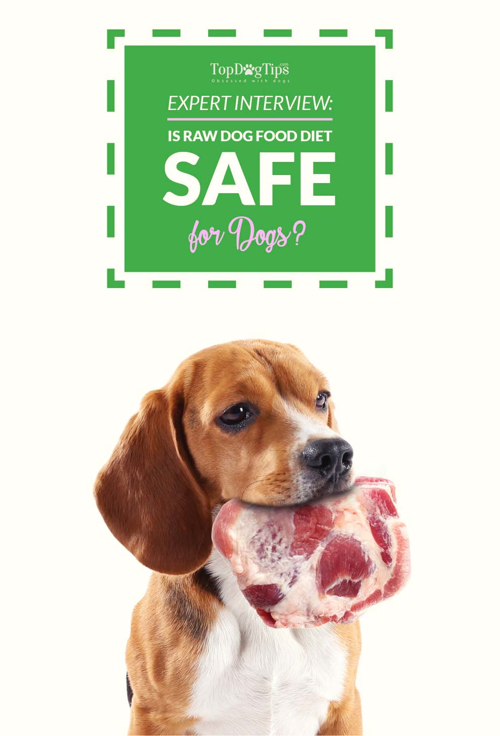 raw dog food diet guide